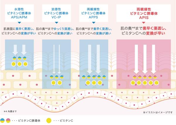 ビタミンC誘導体の種類とその特徴