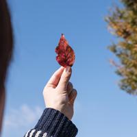 秋の乾燥シーズンに向けて、今から始める乾燥肌対策