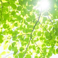 春の紫外線の強さってどれくらい?
